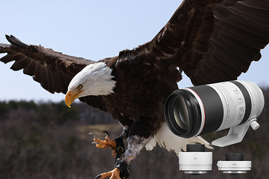 Canon Launches First Super-Telephoto L Zoom Lens for Its RF System Cameras