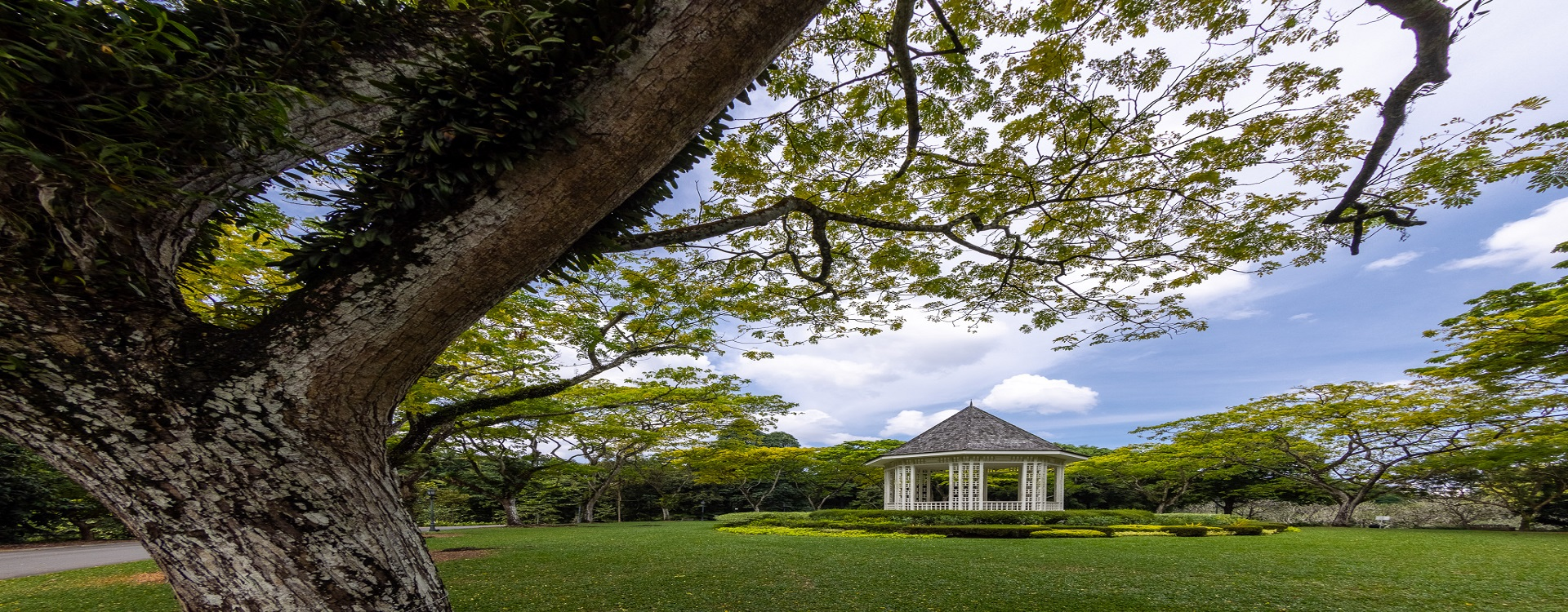210721-botanic garden-Singapore-150301.jpg